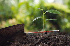 young-plant-growing-brown-soil-shovel-green-bokeh-background-53259242